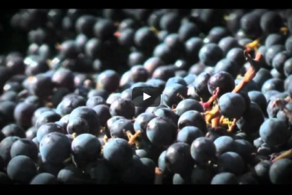 Video-Vignobles-Carreau-Selection